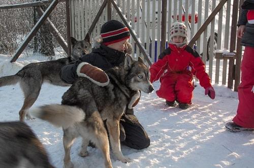 husky-piknik koko perheelle Lempäälässä